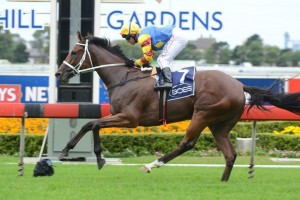 Scorpio Queen is on the second line of betting for the 2014 Magic Millions Stayers Cup.