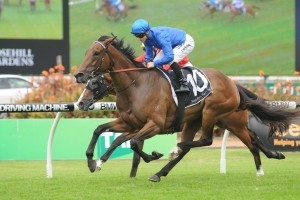 2017 Belle Of The Turf Stakes Betting Tips & Odds