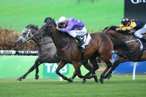 Weary (inside) won the Expressway Stakes at Rosehill on Saturday.