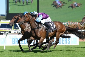 Tales Of Grimm Wins 2015 Scone Cup