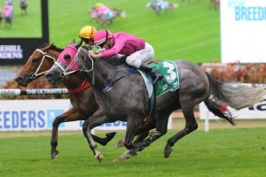 Catkins is clear favourite for success in 2014 Golden Pendant betting markets