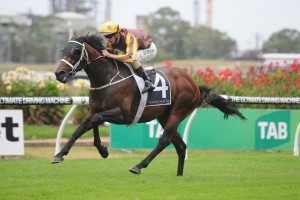El Roca is favourite in betting markets for the Group 1 Randwick Guineas