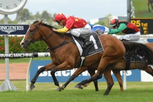 First Seal has returned for success in the Group 2 Millie Fox Stakes at Rosehill this afternoon. Photo: Steve Hart