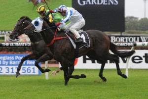 Dissident is yet to be confirmed for the 2014 Warwick Stakes