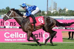 Winx produced an impressive sprint to win the Phar Lap Stakes. Photo: Steve Hart
