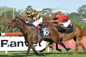 The Galaxy odds were long on the 2016 winner Griante