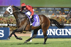 Rosehill Guineas odds were in favour of the 2016 winner Tarzino