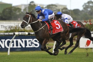Winx remains outright favourite in 2016 Doncaster Mile betting markets. Photo: Steve Hart