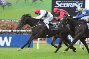 Peeping wins The Sebring at Rosehill on Golden Slipper Day.