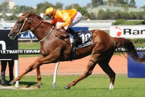 Entirely Platinum will return to racing in Saturday's Group 1 Memsie Stakes at Caulfield. Photo: Steve Hart
