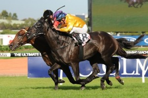 Silent Achiever will return to racing in the 2014 Memsie Stakes