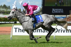 Catkins is among the nominations for the Tristarc Stakes at Caulfield. Photo by Steve Hart.