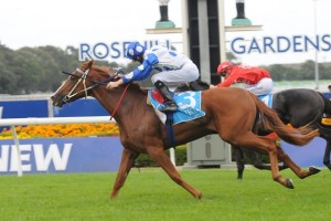 Bring Me The Maid remains clear favourite in 2014 Golden Rose Stakes betting markets.