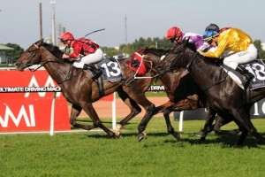 Trainer Joe Pride is eyeing an appearance in the 2014 Craven Plate for Laser Hawk