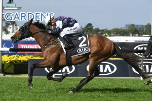 Almandin, above, wins the Tancred Stakes at Rosehill. Photo by Steve Hart.