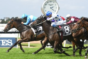 Prompt Response, above in light blue colours. wins the Emancipation Stakes at Rosehill. Photo by Steve Hart.