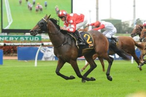 Bachman is our tip to take out Saturday's Daybreak Lover Stakes on the Gold Coast. Photo: Steve Hart