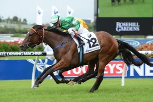 Trainer Anthony Cummings has underlined the 2015 Queen Elizabeth Stakes as the target for the returning Fiveandahalfstar. Photo: Steve Hart