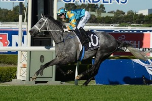 2015 Kingston Town Stakes Tips and Betting Preview