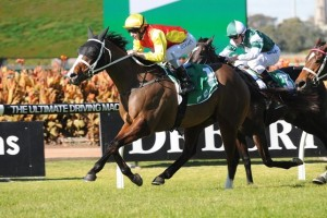 Delectation is the Races.com.au tip to win Saturday's Group 1 Doomben 10,000. Photo: Steve Hart