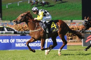 Eurozone is the races.com.au tip to win the 2014 Orr Stakes at Caulfield on Saturday.