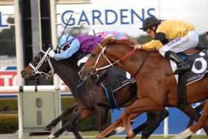 Rugged Cross Wins 2015 Winter Stakes in Sydney