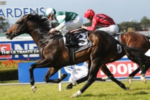 Cluster flew home late to win the Forum Group Handicap at Royal Randwick on Saturday.