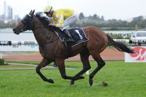 Bull Point has been confirmed in the final field for the 2014 Toorak Handicap