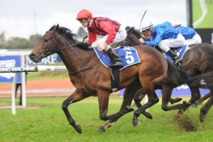 Hallowed Crown will look to complete the Hobartville Stakes-Randwick Guineas double on Saturday.