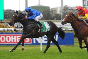 Sweynesse has been confirmed in the 2015 Rosehill Guineas final field. Photo: Steve Hart