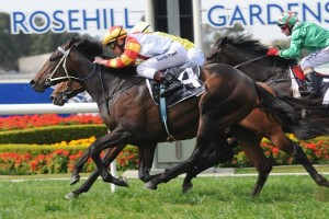 Trainer Peter Moody is hoping to reach the 2014 Toorak Handicap with Stamina