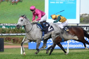 2016 Millie Fox Stakes Odds and Betting Update