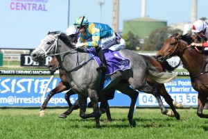 Silverball will be set for The Metropolitan after winning the Kingston Town Stakes at Rosehill. Photo by Steve Hart.