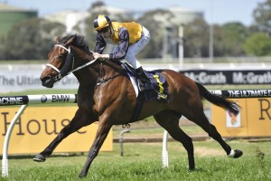 No 2016 Caulfield Cup for Antonio Giuseppe