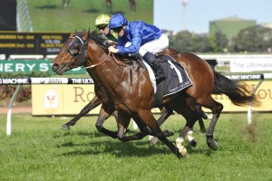 2016 Caulfield Guineas Next for Stan Fox Winner Impending