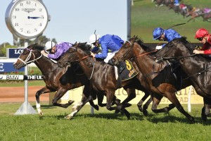 2017 Frank Packer Plate Tips and Betting Preview