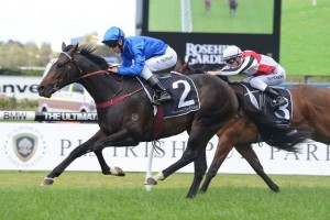 The increase in trip to 2000m in the Rosehill Guineas could help Sweynesse win over Hallowed Crown.