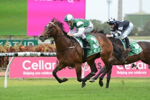 Paceman will jump from the Mossfun's winning barrier in the Silver Slipper Stakes.