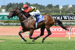 Cantonese will contest the 2014 Darwin Cup