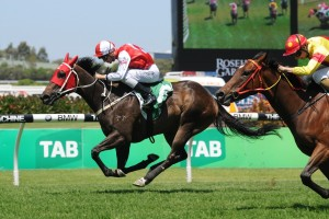 Algeria Leads 2016 Belle Of The Turf Stakes Betting Odds