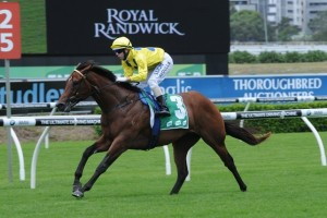 Rubick is undoubted favourite to take out the 2014 Blue Diamond Prelude C&G