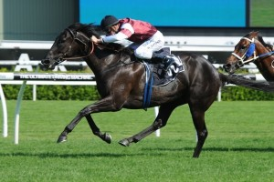 Expressway Stakes odds of $10 were on offer for the 2014 winner Apperance