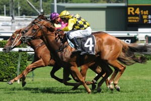Rod Northam is pleased with Big Money ahead of Saturday's 2016 Missile Stakes at Randwick. Photo: Steve Hart