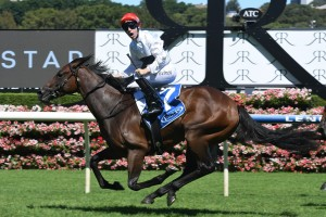 Frolic currently leads 2017 Inglis Sires' betting markets. Photo: Steve Hart