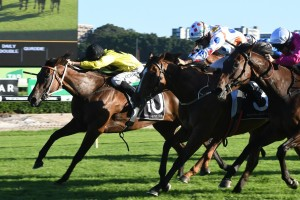 Zestful Delivers Lees Apollo Stakes Day Treble