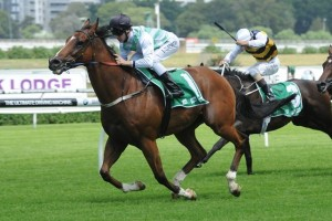Monton will break from barrier 2 in this weekend's Chipping Norton Stakes