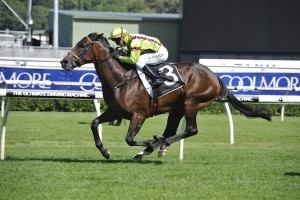 Solicit is primed for Saturday's Group 1 Coolmore Classic at Rosehill. Photo: Steve Hart