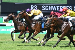 Santos, above in yellow colours and purple cap, holds off all challengers to win the Skyline Stakes at Randwick. Photo by Steve Hart.