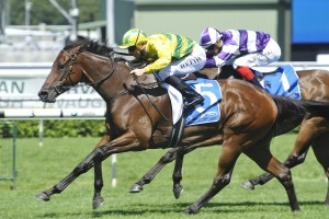 Heavens Above scores a tough win in the Aspiration Quality at Randwick. Photo by Steve Hart.