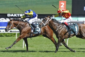 Le Romain defeats Press Statement in 2016 Randwick Guineas